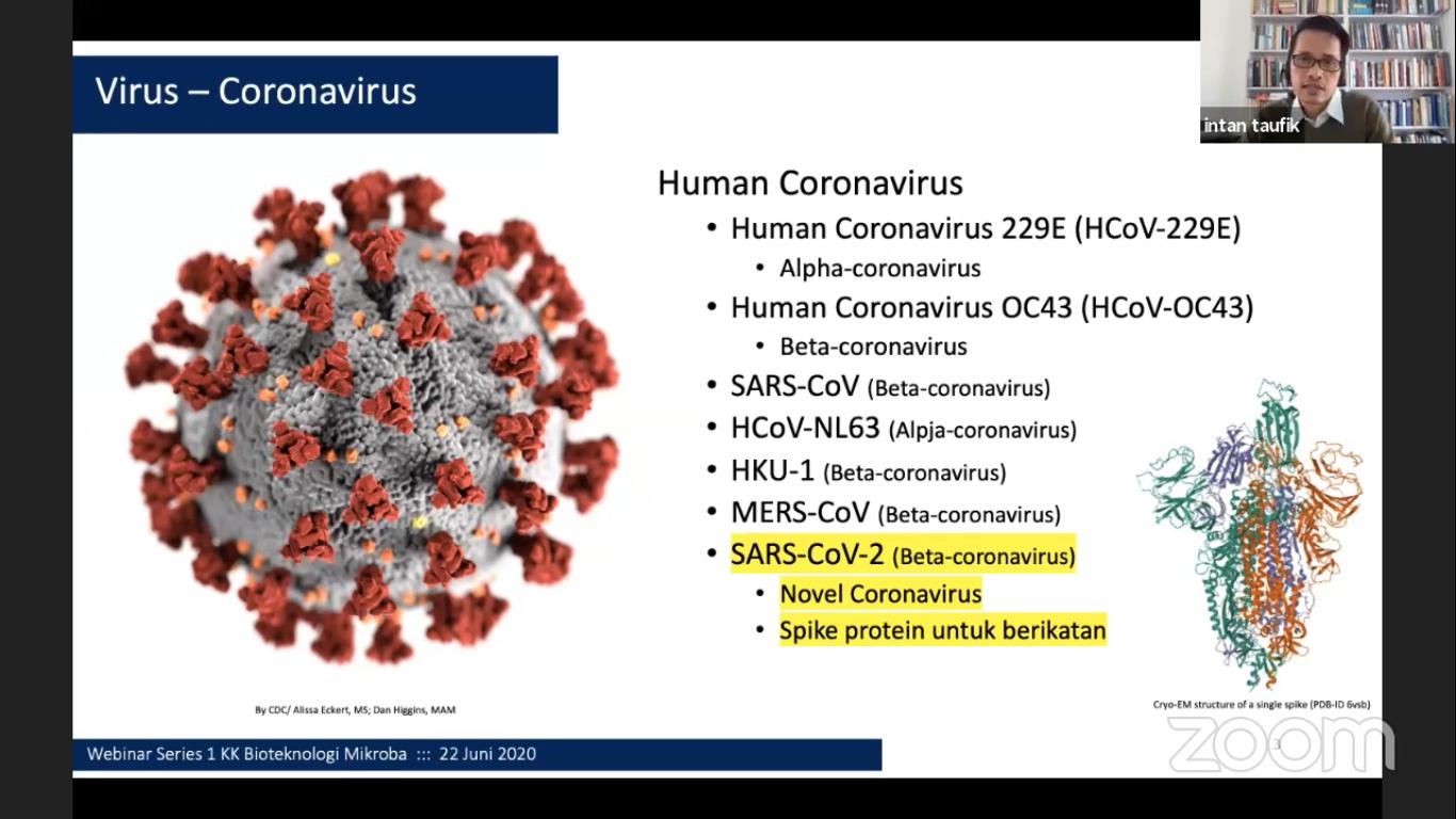 berkenalan-lebih-dekat-dengan-virus-corona-dan-wabahnya