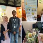 MAREMA Project, Pengembangan Sayur Sehat Melalui Hidroponik dan Openfield